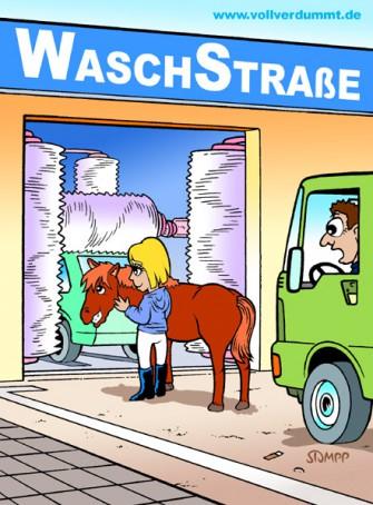 CARTOON Pferd in Waschstraße