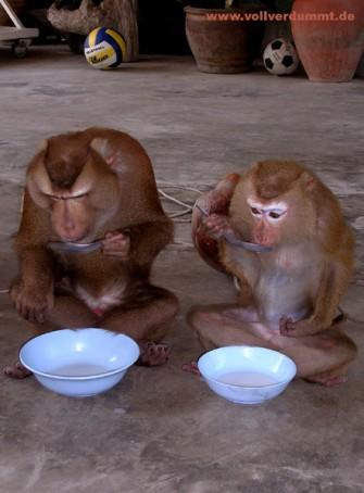 CARTOON Affen mit Tischmanieren