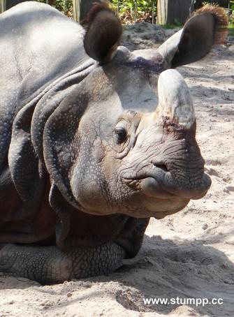 CARTOON Betrunken aussehendes Nashorn
