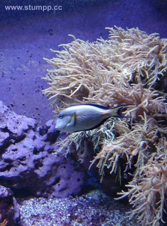 CARTOON Fisch unter Wasser