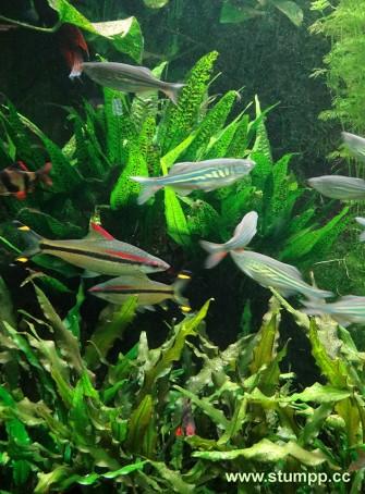 CARTOON Fische am Meeresgrund