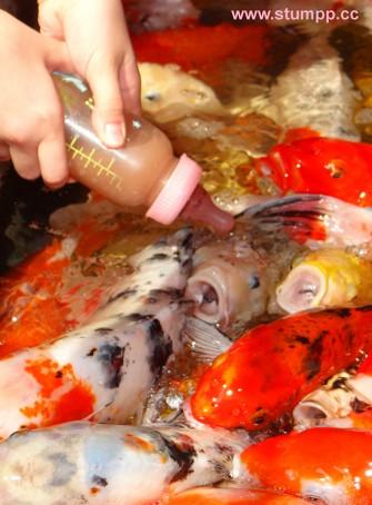 CARTOON Fische Fütterung