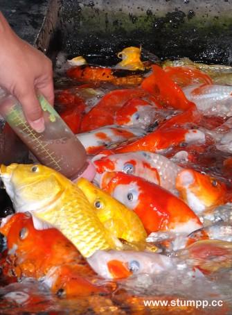 CARTOON Fische Fütterung mit Fläschchen