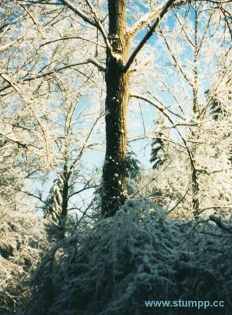 CARTOON Schwarzwald im Winter
