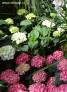 PHOTO Verschiedene Blumen 1