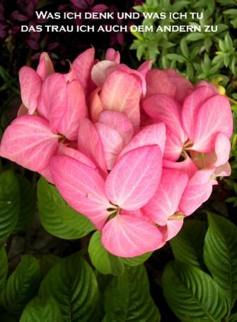 CARTOON Sprichwort mit Blume